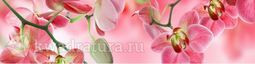 Кухонный фартук ХДФ Орхидея №3